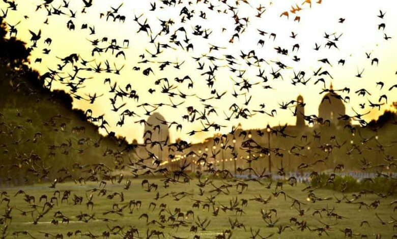 Delhi has the second highest number of bird species in a city after Nairobi (Kenya) where you can sometimes see Marabou Storks nesting on the top of street lights.