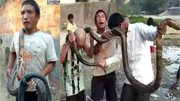 coronavirus: Men slaughter king cobra for feast, viral video